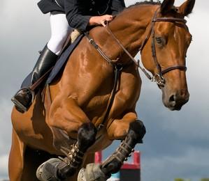 cavalo-terapia-tecnologia-no-campo (Foto: Divulgação)