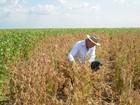 'Colheita da Soja 2016' em Roraima terá palestras e Dia de Campo