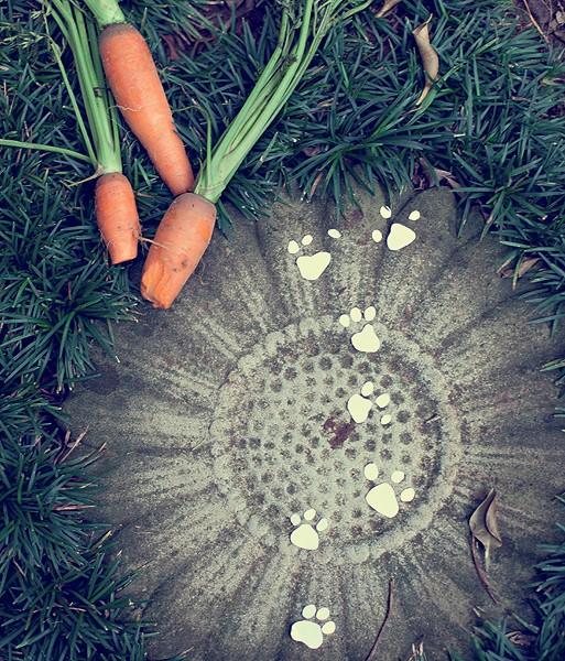 Na brincadeira das crianças, patinhas de papel e cenouras mordidas espalhadas pelo jardim são pistas do caminho percorrido pelo coelho (Foto: Foto Rogério Voltan | Realização Cláudia Pixu | Produção Camile Comandini)