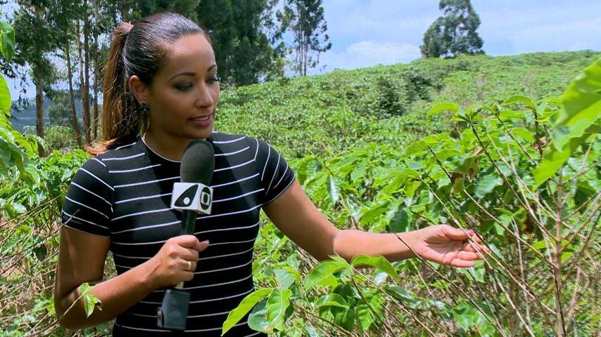 Fabiola de Paula vai até Brejetuba acompanhar a colheita do café arábica (Foto: Divulgação/ TV Gazeta)