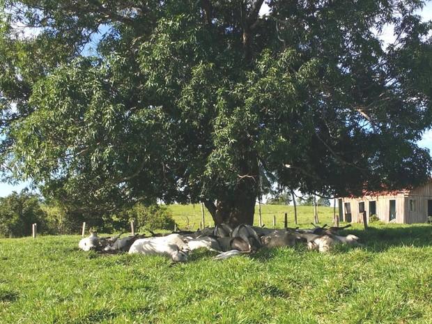 Dono de gado só achou corpos três dias depois (Foto: Reprodução/ WhatsApp)