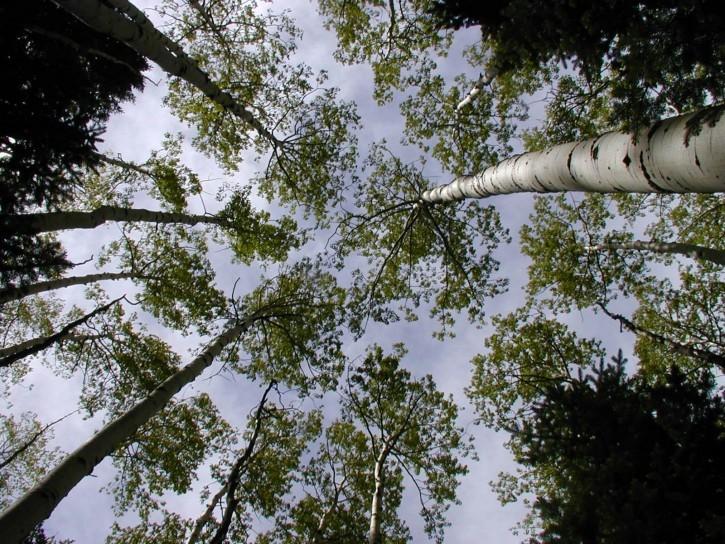 Emissões de carbono nas florestas diminuíram 25% desde 2001, diz FAO