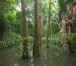 floresta (Foto: Thiago Haussig/ Divulgação)
