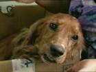 Abandono de animais aumenta nos meses de verão em Santa Maria, RS