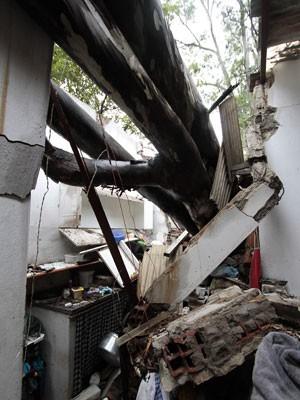 Árvore caiu sobre cozinha de casa em Olinda (Foto: Edmar Melo/JC Imagem/Estadão Conteúdo)