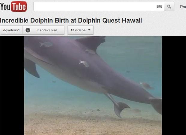 Após uma hora em trabalho de parto, o filhote de golfinho nasceu e saiu nadando em piscina de instituto dos EUA> (Foto: Reprodução/Youtube)