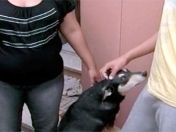Cadela Loba recebe o carinho do adolescente e da mãe (Foto: Reprodução/RBS TV)
