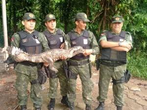 Jacaré foi apreendido por policiais militares após ser visto circulando em área das obras do BRT, em Belém. (Foto: Divulgação/Polícia Militar do Pará)