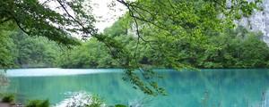 Parque na Croácia parece floresta encantada  (Regina Celia Travaglini/VC no G1)