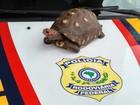 Tartaruga é resgatada pela polícia na Via Dutra em Aparecida, SP