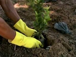 Arborização toma conta de Maceió  (Foto: Reprodução/ TV Gazeta)