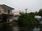 Árvore cai com forte vento após chuva, no Centro de Macapá