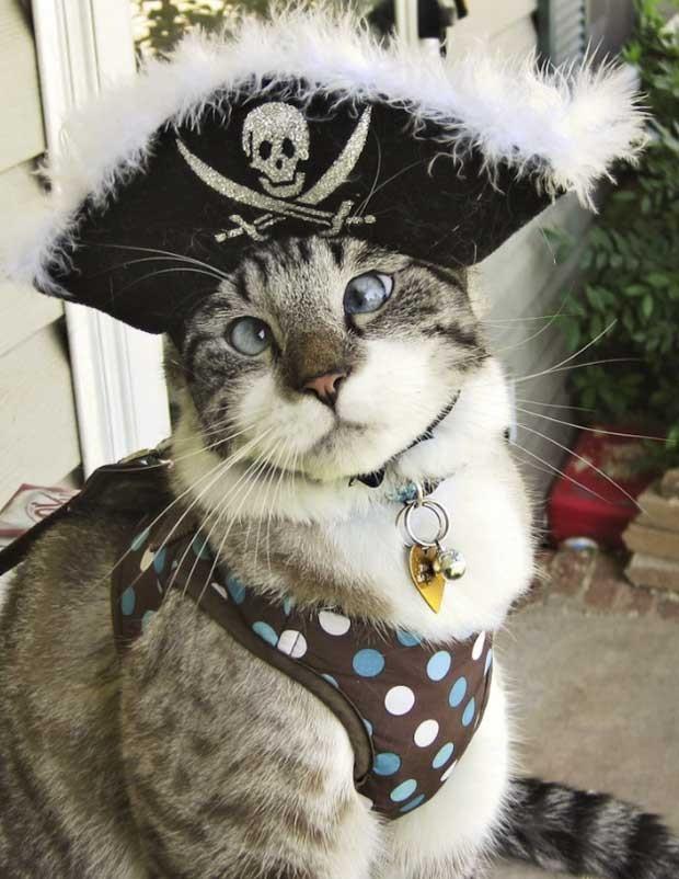 Spangles, o gatinho vesgo, vestido de pirata (Foto: Reprodução/Facebook)