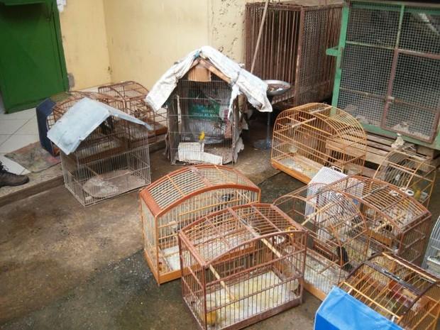 Mais de 140 aves foram apreendidas em Esmeraldas. (Foto: Divulgação/Polícia Militar do Meio Ambiente)