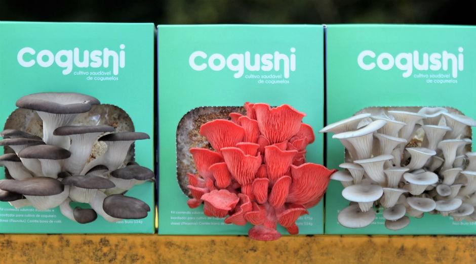 A Cogushi oferece quatro tipos de Shimeji. Todos tem  sabores semelhates, mas diferentes texturas  (Foto: Divulgação)