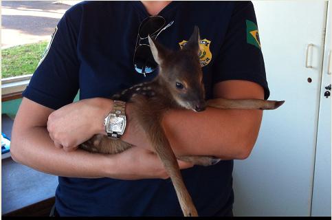 Animal foi abandonado pela mãe que fugiu após ser atropelada (Foto: PRF/Divulgação)