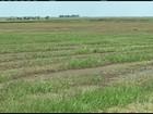 Plantio do arroz está adiantado no Rio Grande do Sul