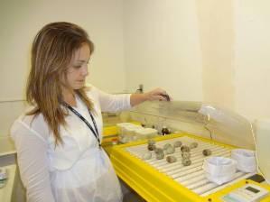 Veterinária Stefênia Miranda observa os ovos um a um. (Foto: Thais Rezende/ G1)