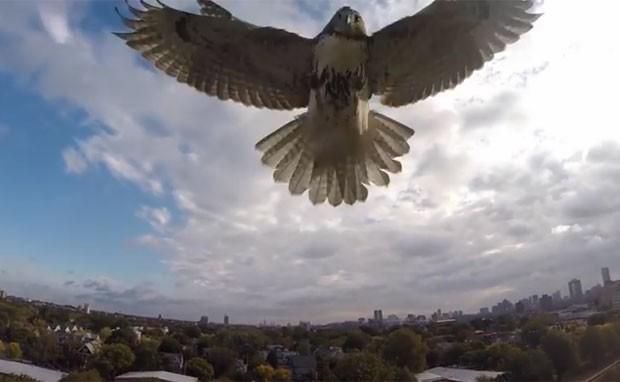 Vídeo mostra falcão atacando drone  (Foto: Reprodução/YouTube/Christopher Schmidt)