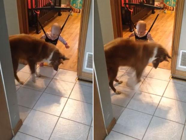 Vídeo mostra cão ensinando bebê a pular em balanço (Foto: Reprodução/YouTube/Sabrina Sauve)