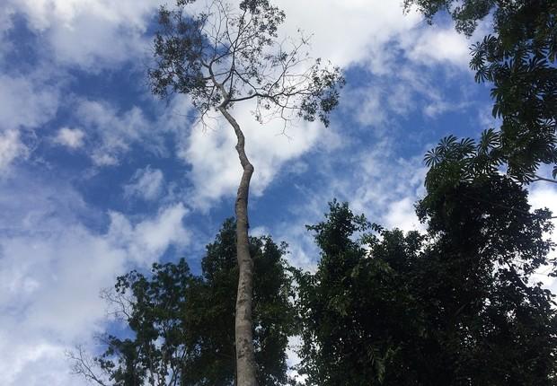 Amazônia ; floresta tropical ; reserva indígena ; sustentabilidade ; desmatamento ;  (Foto: Chris Arsenault/Reuters)