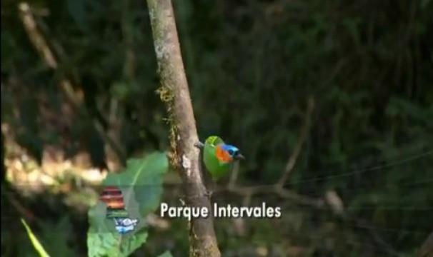 O Parque Estadual Intervales possui uma grande variedade de fauna e flora (Foto: Reprodução / TV TEM)