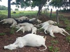 Bezerros são atingidos por raio e morrem em fazenda no sul do TO