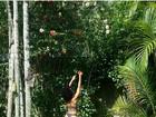 Sheron Menezzes capricha em fio dental em foto no jardim florido