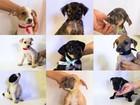 Projeto da UFPA que atende cães abandonados precisa de doações