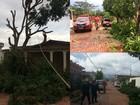 Temporal provoca queda de árvores em casas na capital nesta quinta (6)