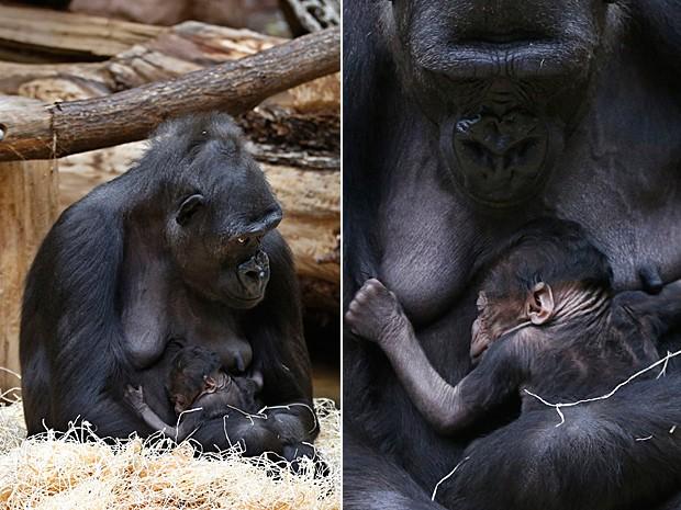 Gorila (Foto: Petr David Josek/AP)