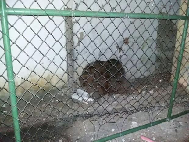 Muro do Complexo do Curado é explodido, mas presos não fogem (Foto: Divulgação)