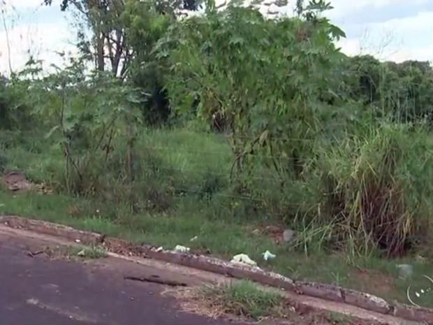 Em janeiro deste ano foram 220 multas aplicadas a proprietários de terrenos (Foto: Reprodução/TV TEM)