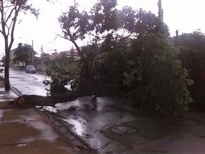 Árvore caiu no Éden fechando a rua (Foto: Tiago Cavalcant/Arquivo Pessoal)