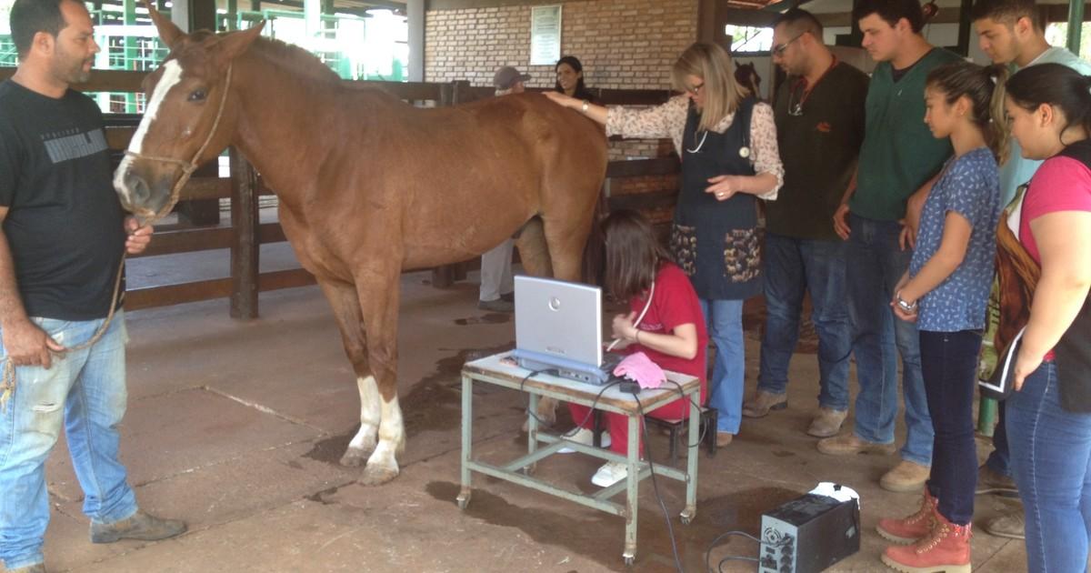 Projeto de hospital veterinário atende de graça cavalos que puxam carroças
