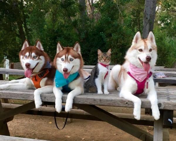 Gata Rosie no meio dos cães que vivem na mesma casa (Foto: Reprodução/Facebook)