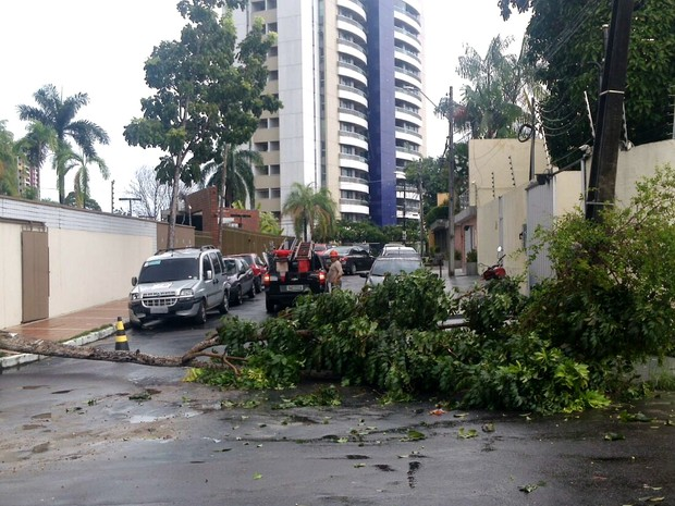 Árvore desabou sobre rede elétrica e causou desligamento (Foto: Divulgação/Eletrobrás)