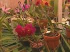 Colecionador de Ribeirão Bonito, SP, acumula mais de 20 mil orquídeas