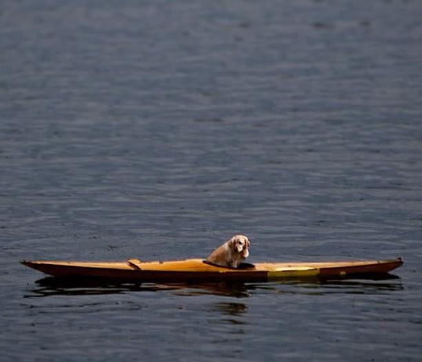 Cadela da raça labrador entrou em caiaque e foi parar no meio de lago (Foto: Reprodução/ Instagram/Will Copestake)