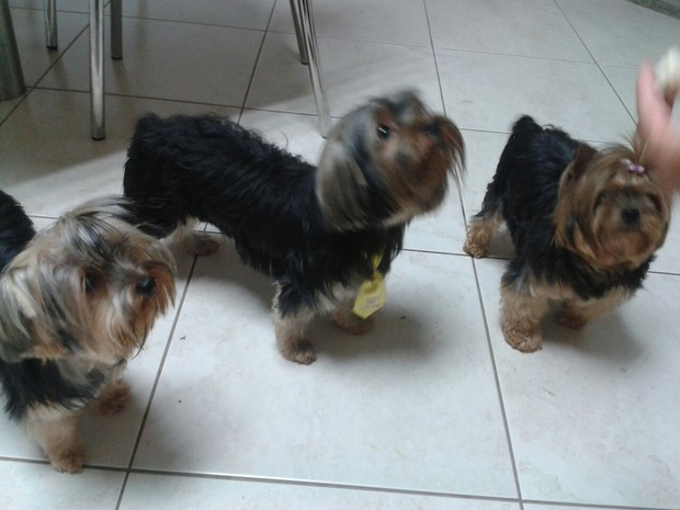Maggie, Jolie e Luiggi moram na casa de Miriam  (Foto: Miriam Maria Teixeira / Arquivo pessoal )