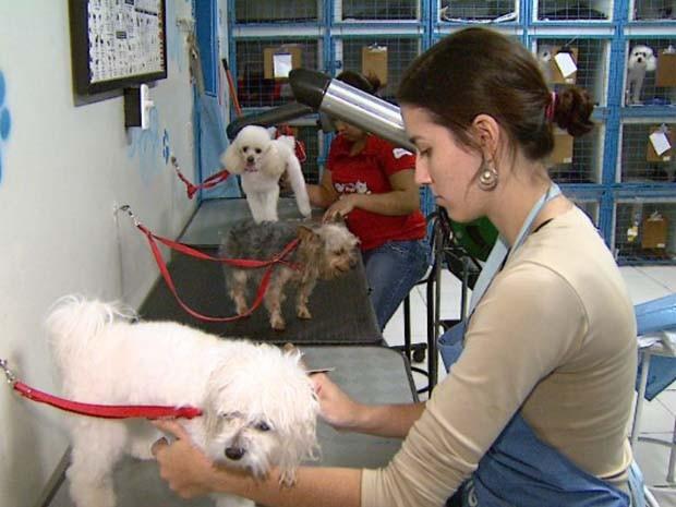 Pet shop e criadores investem em segurança para evitar furtos de filhotes de raça em Ribeirão (Foto: Reprodução/EPTV)