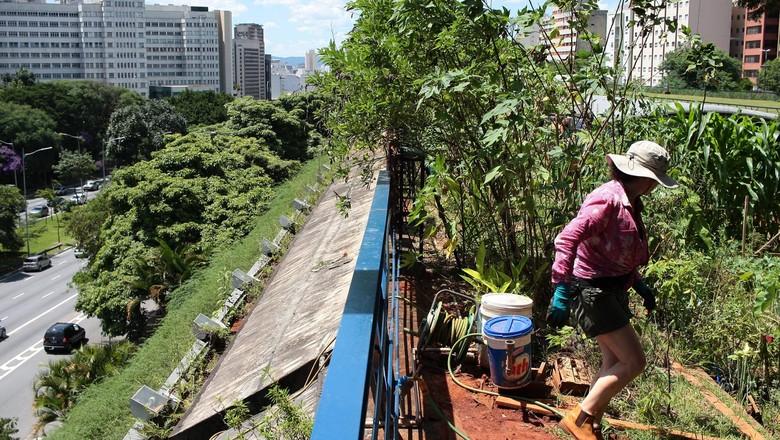 Horta do centro cultural de são paulo  (Foto: Reprodução/Facebook)