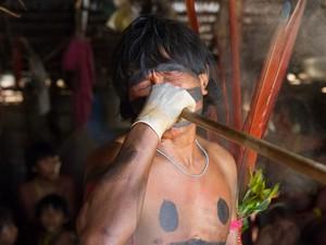 Segundo os Yanomami, a Yakuana serve para 'abrir a visão' e auxiliar na comunicação com os espiritos (Foto: Inaê Brandão)