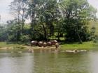 Hipopótamos, o curioso legado de Pablo Escobar para a Colômbia