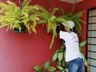 Mutirão contra o Aedes mobiliza 1.200 agentes no Oeste Paulista
