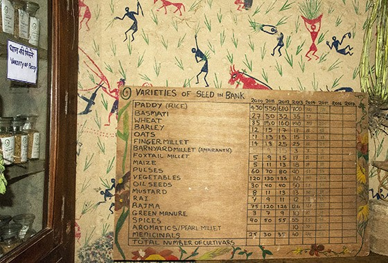 Um quadro mostra os números de variedades no banco de sementes de Navdanya  (Foto: © Haroldo Castro/ÉPOCA)