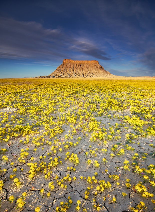 As Raras Flores Do Deserto Casa Vogue Fotografia
