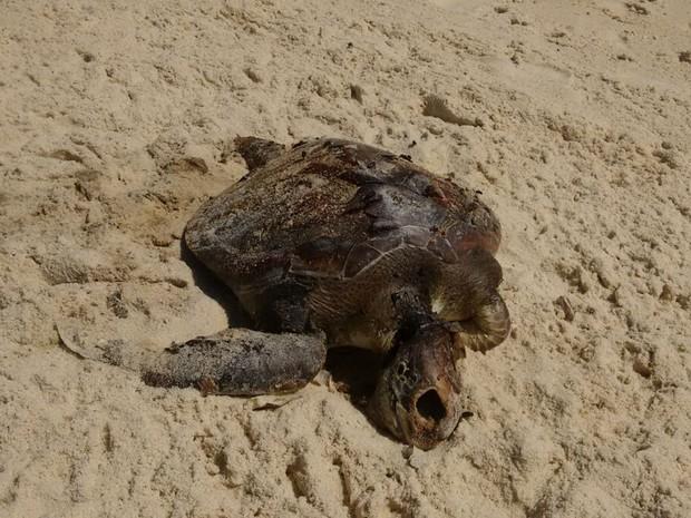 Animal foi visto na areia da Praia de São Conrado (Foto: Marcello Farias/ Salvemos São Conrado)