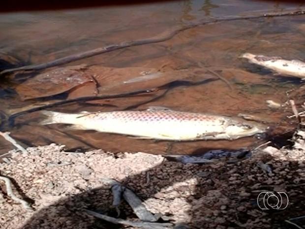 Peixes mortos são encontrados às margens do Rio São Marcos, entre Goiás e Minas Gerais (Foto: Reprodução/TV Anhanguera)