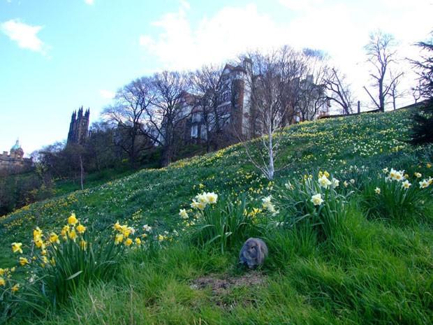 O coelho em frente a um castelo na Grã-Bretanha (Foto: Korrasut Khopuangklang/Arquivo pessoal)